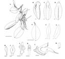 Nová publikace popisující nový druh orchidejí