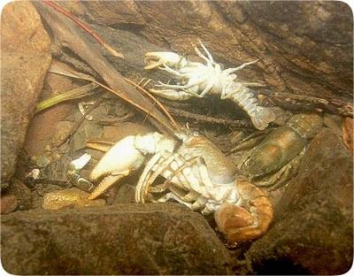Mrtví kamenáči