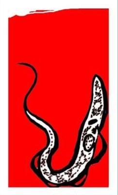 logo parazitologie