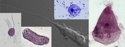Skupina výzkumu diverzity a fylogeneze anaerobních protist