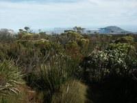 fynbos-stolova_hora.jpg