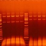 Buněčná a molekulární biologie rostlin