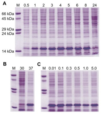 ProteinExprPurif-elfo