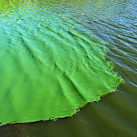 Popular Science: Ubiquitous cyanobacteria and how to treat them