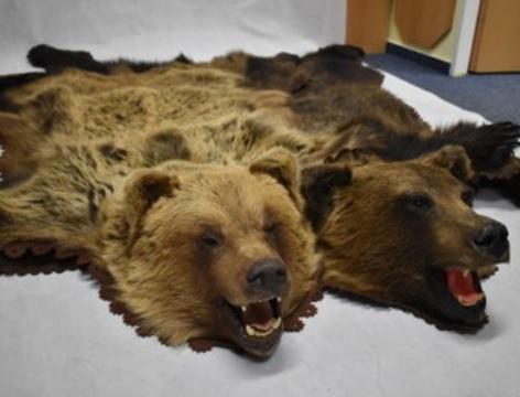 Popular Science: One bear, please! or Bear trade in the Czech Republic