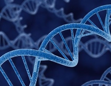 Artificial chemical DNA switch helps understand epigenetic mechanisms