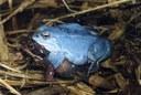 Modří žabáci 2