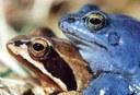Modří žabáci 3