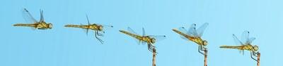 Přistání vážky