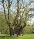 Nejmohutnější-památné-stromy_oříz.jpg