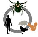Zapojte se s námi do výzkumu parazitů volně žijících zvířat