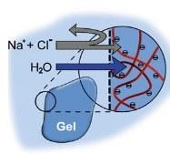 hydrogel.jpg