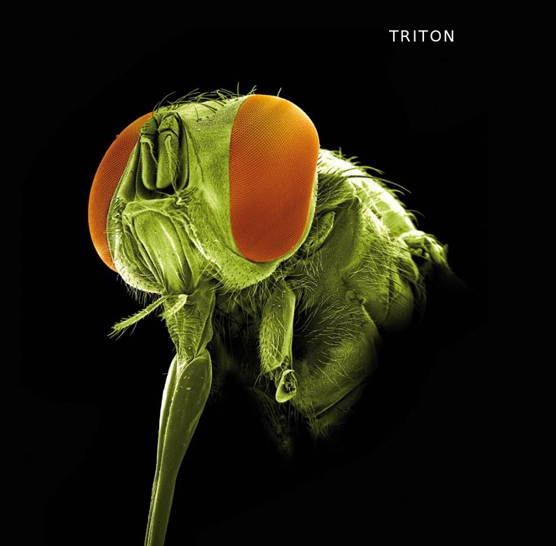 Nová kniha: O parazitech a lidech