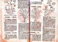 Ze starých herbářů je nejznámější uprava Mattioliho herbáře od Tadeáše Hájka (1562 a 1596), o 50 let dříve (1517) vyšel v Norimberku herbář lékaře Jana Černého (asi 1456-1525).