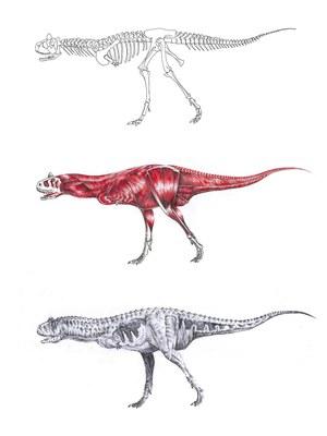 CettlDinosaurus.jpg