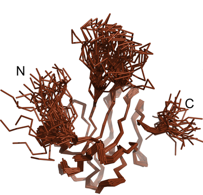 nukleokapsidový fosfoprotein