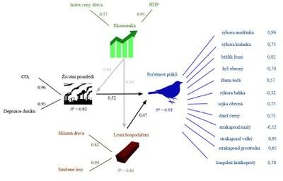 lesní ptáci schéma