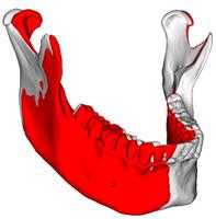 Průměrná asymetrie dolní čelisti v mikulčickém souboru (červená barva – asymetrická dolní čelist, bílá barva – symetrická dolní čelist).