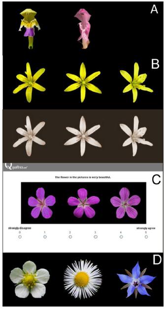 obrazky-kvetin