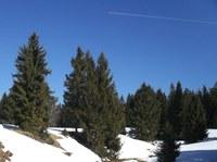 Půda pod smrkem ztepilým (Picea abies) v Krušných horách se stále nevzpamatovala z acidifikace vrcholící v 80.letech 20. století. Jehličnaté lesy jsou však důležitým prvkem ekosystému, jelikož jsou mimo jiné schopné fotosyntézy i v zimních měsících. Foto: K.Fraindová.