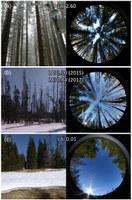 Hemisférické snímky (a) zdravý jehličnatý les (b) kůrovcem poškozený jehličnatý les (c) otevřená plocha.  Zdroj: Autoři původního článku.
