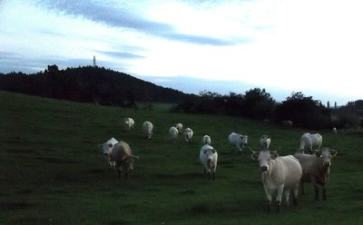 Pastviny pod Veselým vrchem