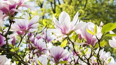 flower-3339266__340.jpg