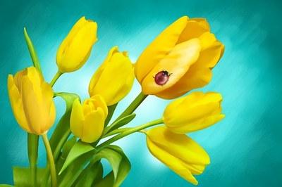 flowers-1018499__340.jpg