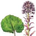 Křest knihy Rostliny naší přírody