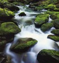 A COURSE OF STREAM ECOLOGY