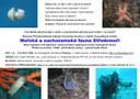 Nabídka exkurze - Mořská a suchozemská fauna Středomoří