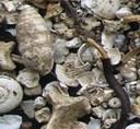L. Juřičková: Využití paleofaunistiky měkkýšů v zoogeografii